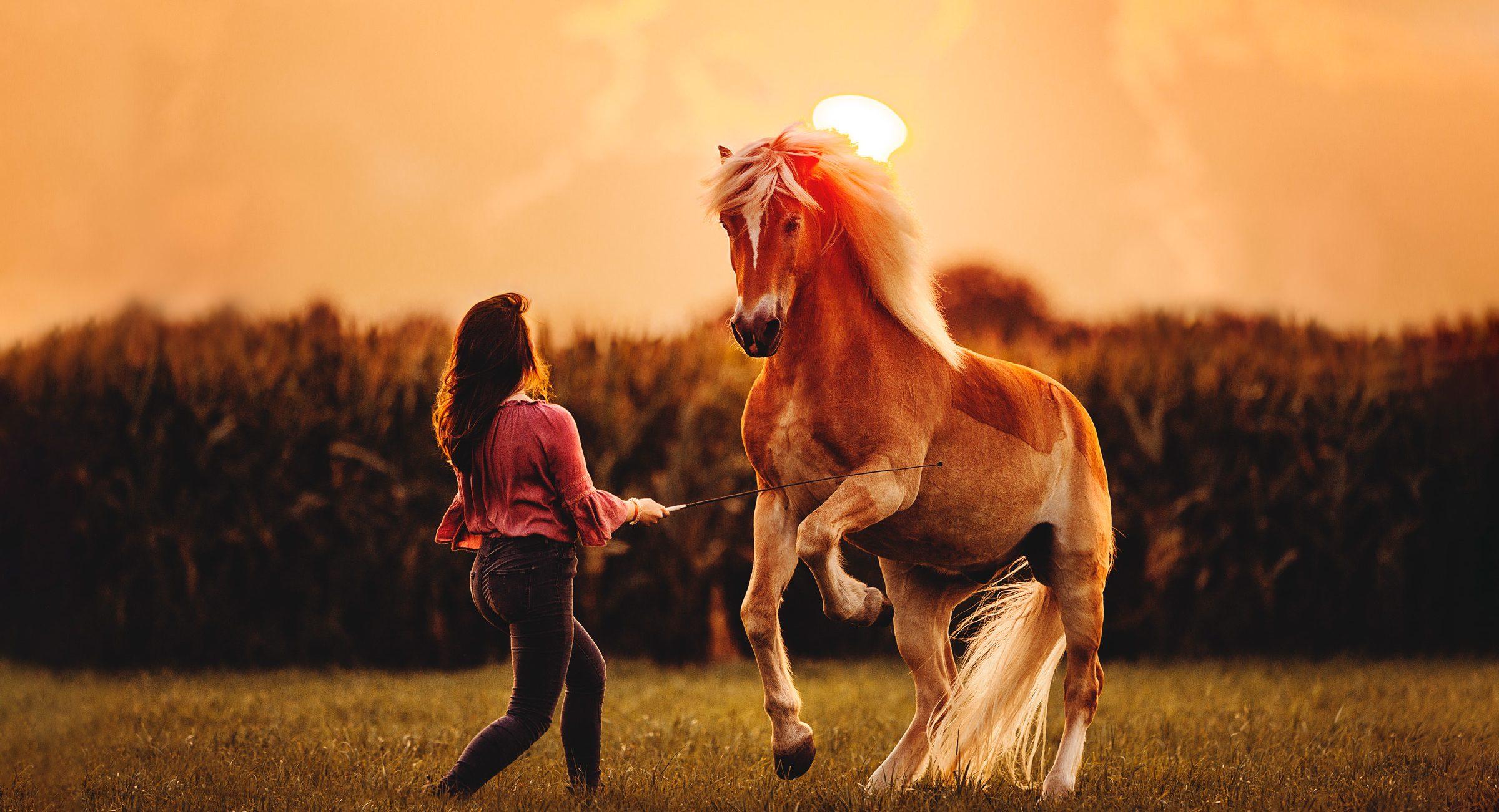 Menschen Und Pferde