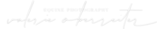Pferdefotografie aus Österreich - Valerie Oberreiter